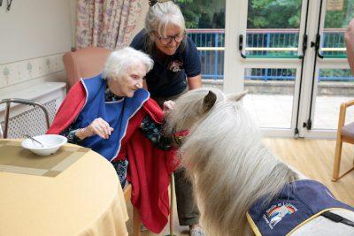Shetland Pony Visits, Sheffield, 28 August 2018