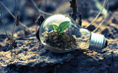 environment bulb